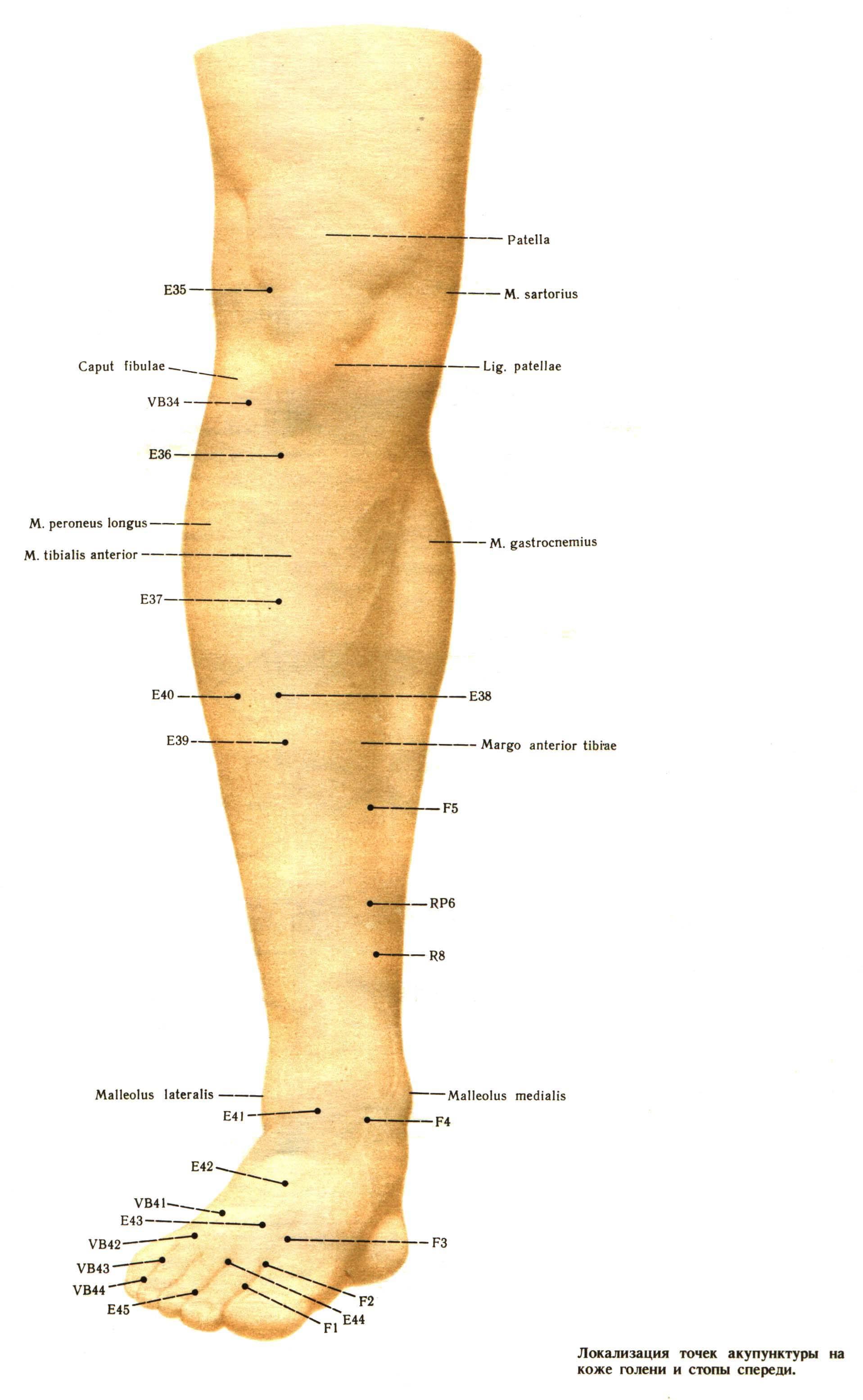 где находится голеностопный сустав у человека фото